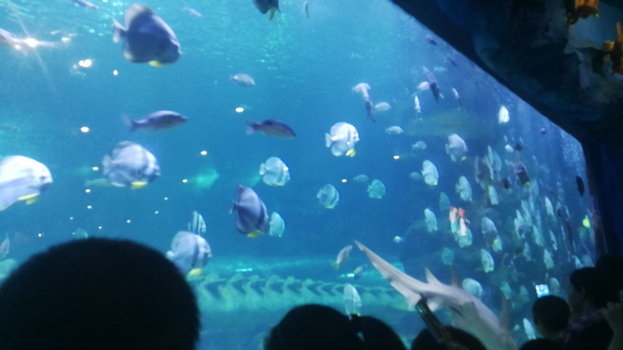 西安海洋馆游